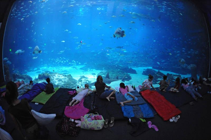 worlds largest aquarium atlanta georgia 19 The World's Largest Aquarium [25 pics]