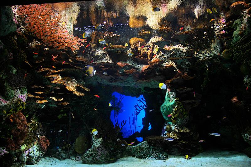 worlds largest aquarium atlanta georgia 22 The World's Largest Aquarium [25 pics]