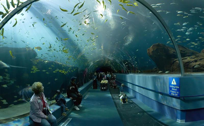 worlds largest aquarium atlanta georgia 24 The World's Largest Aquarium [25 pics]