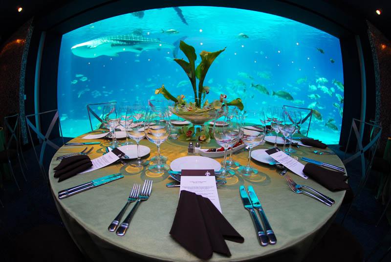 worlds largest aquarium atlanta georgia 5 The World's Largest Aquarium [25 pics]