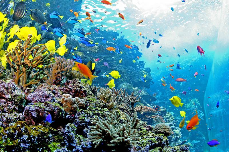 worlds largest aquarium atlanta georgia 7 The World's Largest Aquarium [25 pics]