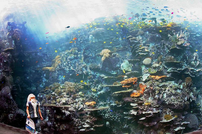 worlds largest aquarium atlanta georgia 9 The World's Largest Aquarium [25 pics]