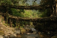 Picture of the Day: Living Root Bridges of Meghalaya, India