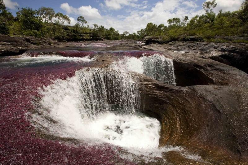 rio cano cristales river of five colours columbia 15 The River of Five Colors: Cano Cristales, Colombia