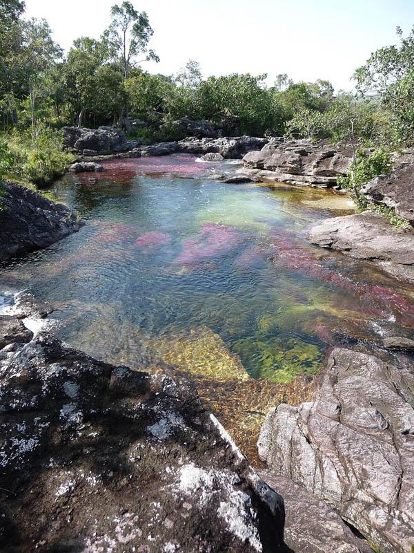 rio cano cristales river of five colours columbia 19 The River of Five Colors: Cano Cristales, Colombia