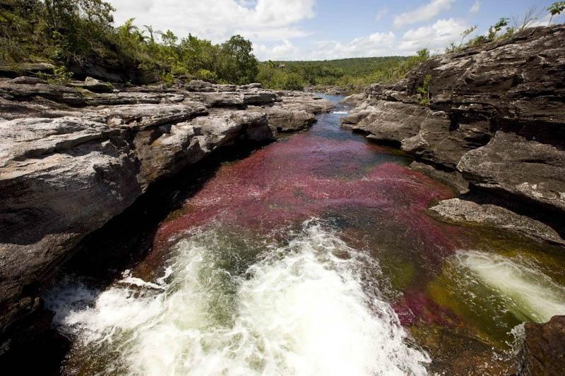 rio cano cristales river of five colours columbia 21 The River of Five Colors: Cano Cristales, Colombia