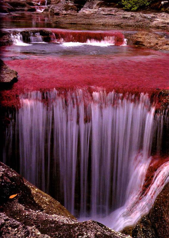 rio cano cristales river of five colours columbia 6 The River of Five Colors: Cano Cristales, Colombia