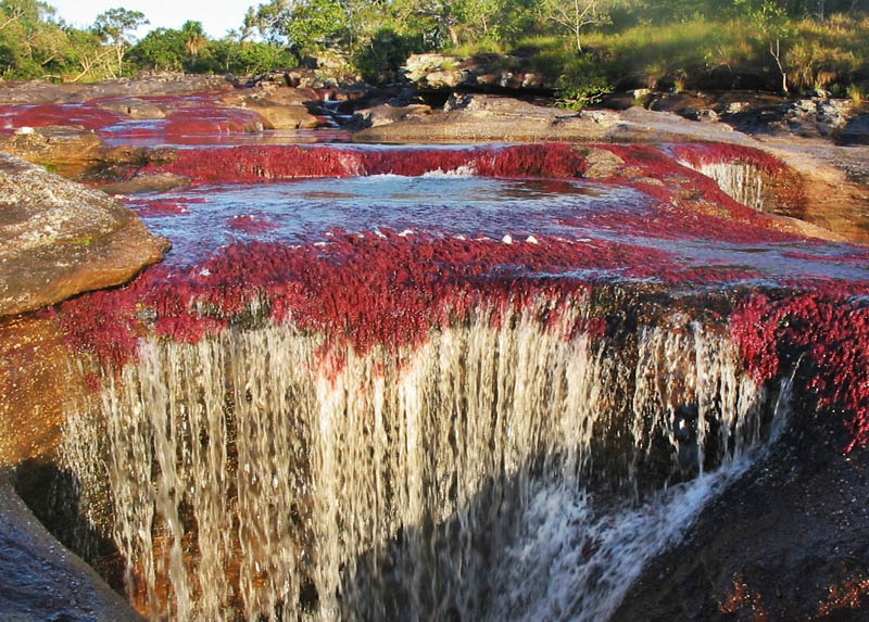 rio cano cristales river of five colours columbia 9 The River of Five Colors: Cano Cristales, Colombia