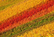 Picture of the Day: Colorful Vineyards of Chianti Classico in Tuscany