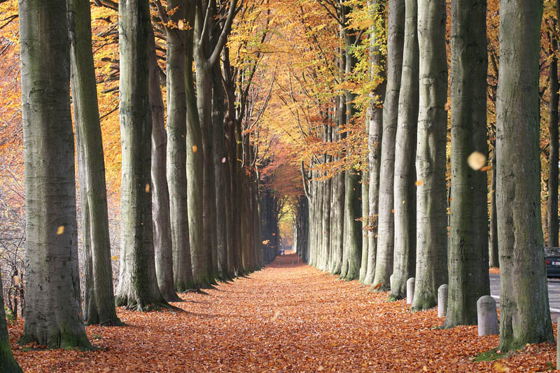 european beech trees of mariemont belgium Picture of the Day: European Beech Trees of Mariemont, Belgium