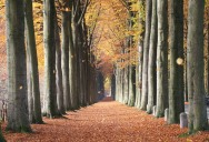 Picture of the Day: European Beech Trees of Mariemont, Belgium