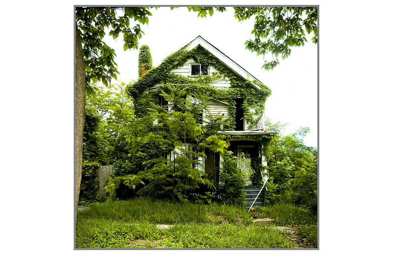 feral houses by james griffioen 2 Feral Houses by James D. Griffioen