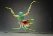 The Incredible Praying Mantis [25 pics]