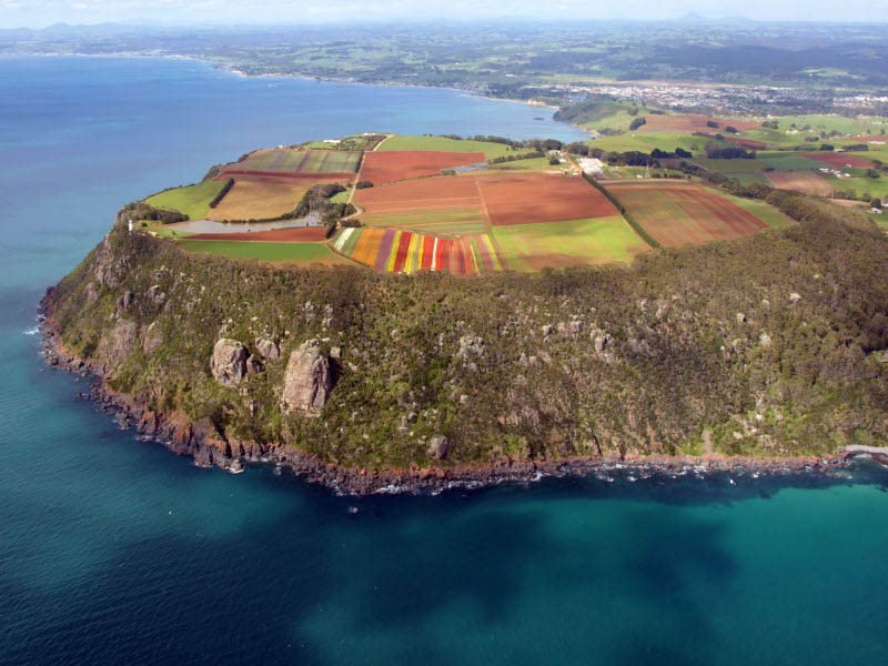 table cape tulip farm aerial photograph tasmania Picture of the Day: The Table Cape Tulip Farm from Above
