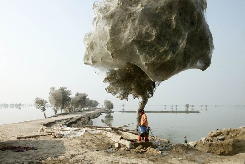 trees covered in spider webs in pakistan 4 Trees Turned Into Giant Spider Webs From Flooding