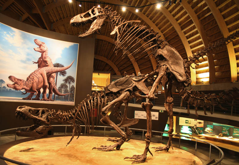 tyrannosaurus sex dinosaur skeletons in museum mating Picture of the Day: Tyrannosaurus Sex