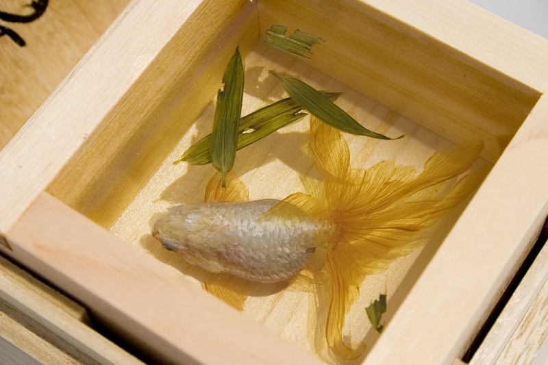 3d fish sculpture paintings layer by layer riusuke fukahori 4 Incredible 3D Sculptural Art Painted Layer by Layer