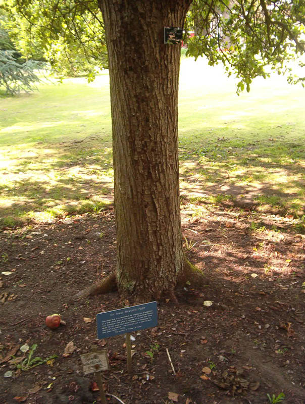 newtons apple tree botanic gardens cambridge This Day In History   January 4th