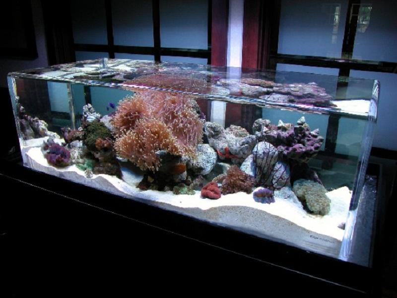 zero edge infinity pool aquarium Picture of the Day: The Infinity Edge Aquarium
