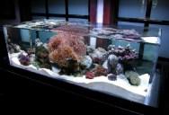 Picture of the Day: The Infinity Edge Aquarium