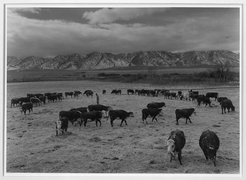 ansel adams life on japanese internment camps wwii manzanar 22 Ansel Adams Captures Life on a Japanese Internment Camp