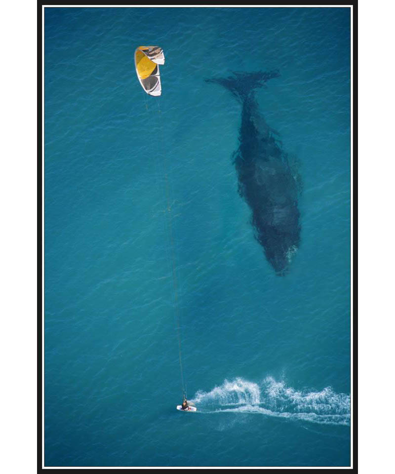 kite surfing with whale below aerial shot from above Picture of the Day: Putting the Size of a Whale in Perspective