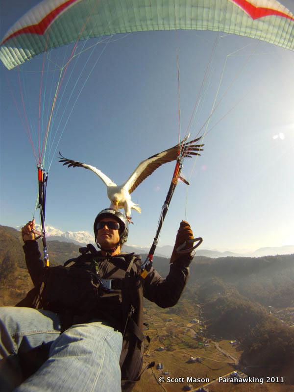 parahawking in nepal scott mason 4 The Ultimate Guide to Parahawking in Nepal