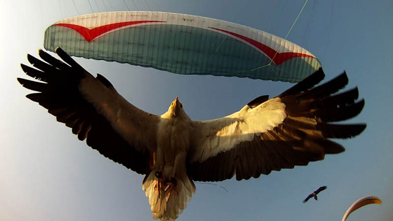 parahawking in nepal scott mason 6 The Ultimate Guide to Parahawking in Nepal