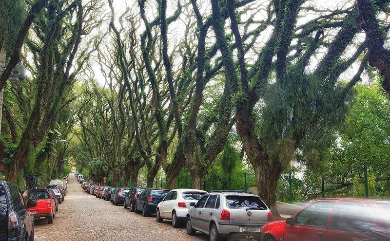 tree covered street porto alegre brazil rue goncalo de carvalho 4 Stunning Street in Porto Alegre, Brazil is Blanketed in Trees