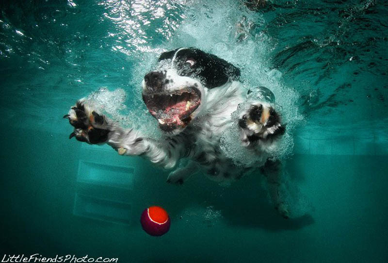 underwater photos of dogs seth casteel 7 12 Underwater Photos of Dogs Fetching Their Ball