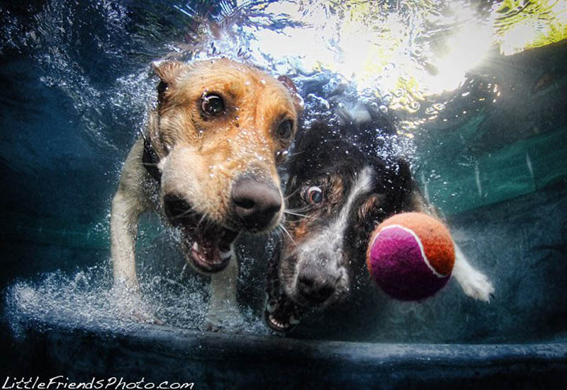 underwater photos of dogs seth casteel 9 10 Hilarious Portraits of Dogs Underwater