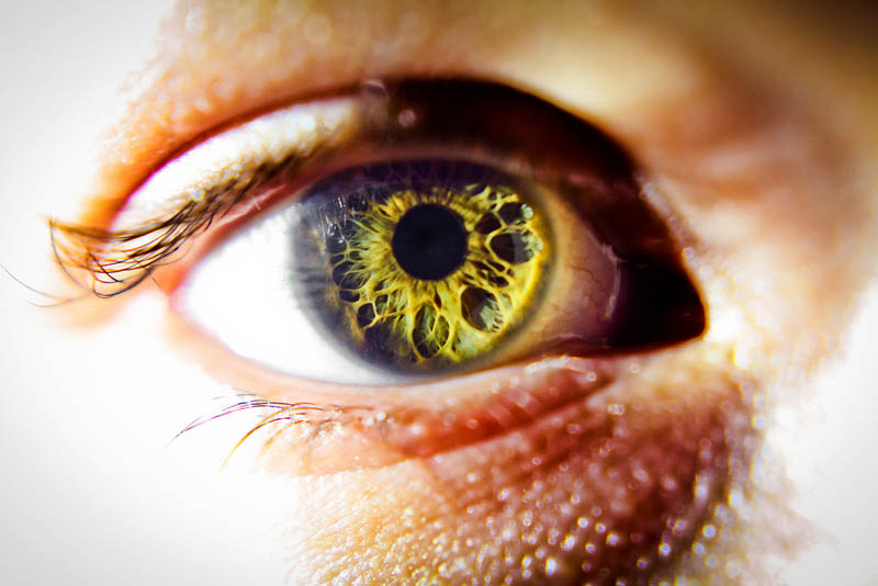yellow eye closeup macro Picture of the Day: The Window to Your Soul