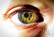 Picture of the Day: The Window to Your Soul