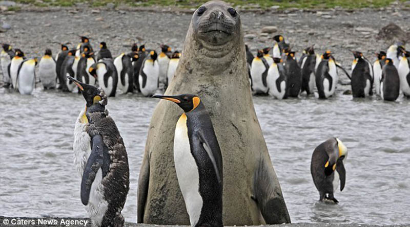 animal photobomb seal photobombing penguins The 15 Greatest Animal Photobombs of All Time