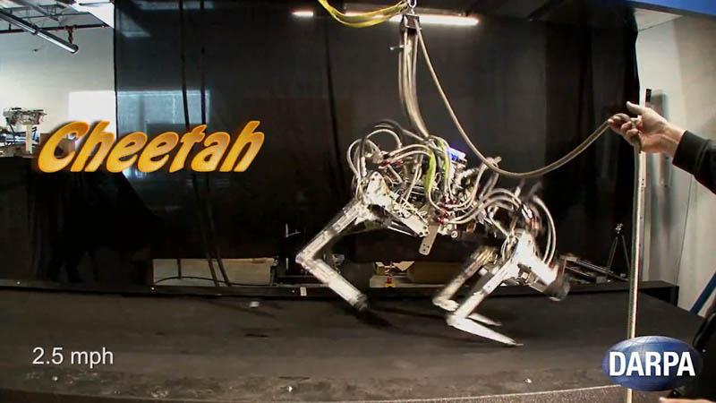 darpa cheetah sets speed record for legged robots 2 DARPA Cheetah Sets Land Speed Record for Legged Robots at 18mph (29km/h)