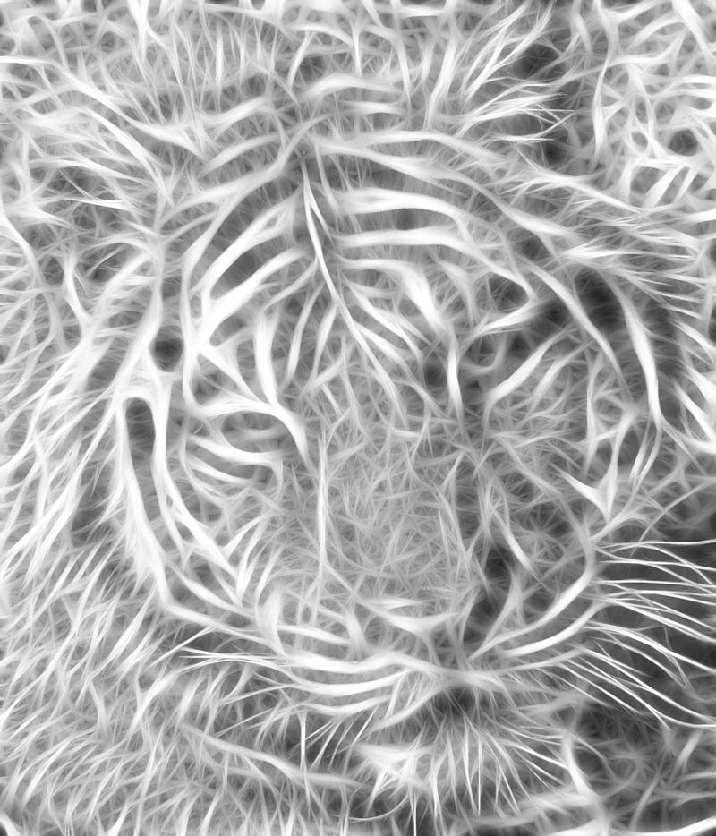 Picture of the Day: The Fractal Tiger