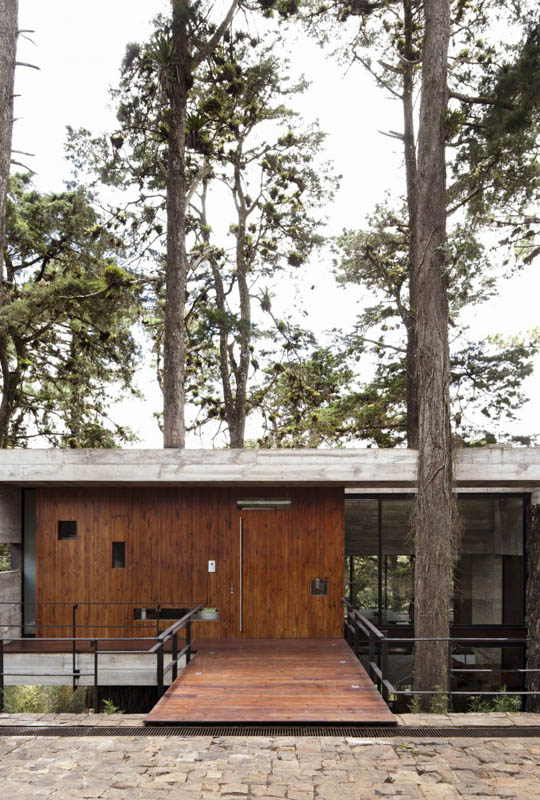 house in forest with trees growing through it 1 An Incredible Home in the Forest With Trees Growing Through It