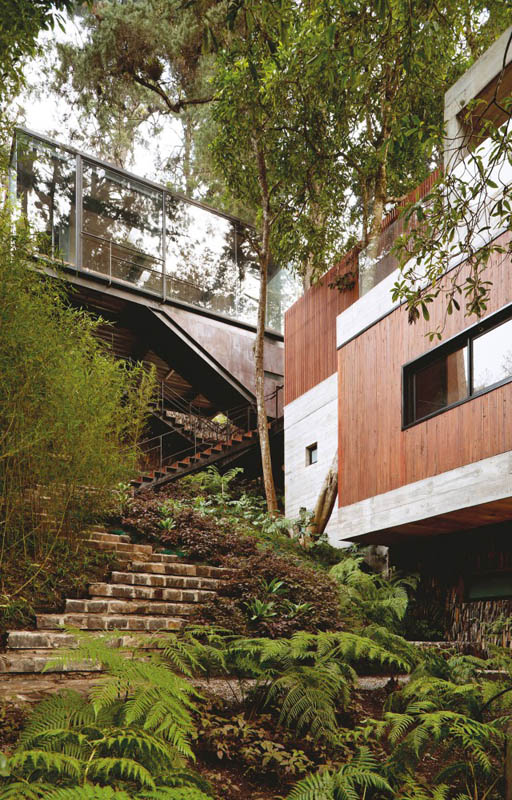 house in forest with trees growing through it 21 An Incredible Home in the Forest With Trees Growing Through It