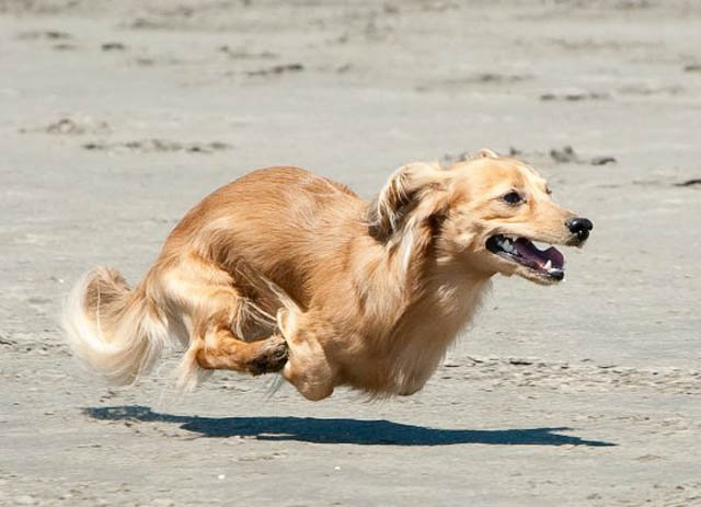 hover dog flying dog 3 The 25 Funniest Hover Animals Ever