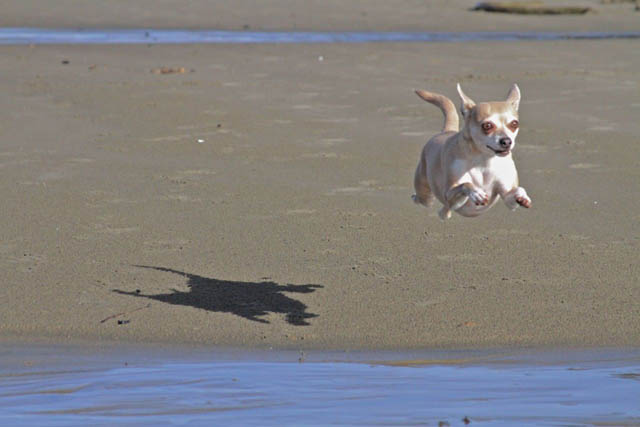 hover dog flying dog 9 The 25 Funniest Hover Animals Ever