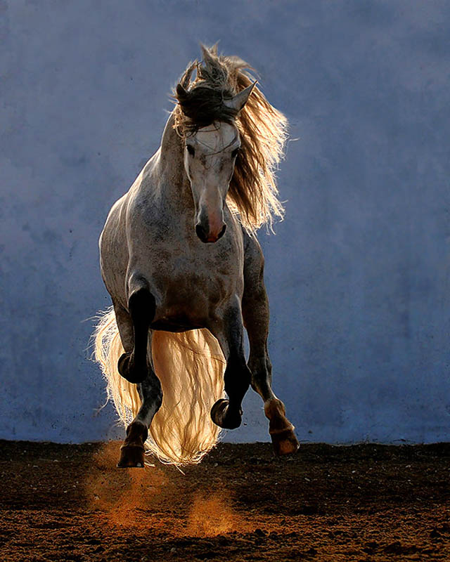 hover horse The 25 Funniest Hover Animals Ever