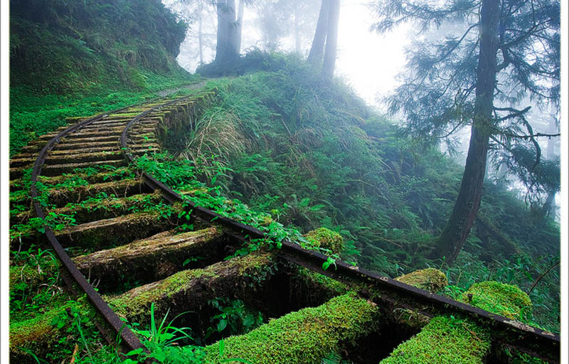 Picture of the Day: Overgrown Railroad Tracks in the Forest » TwistedSifter