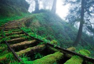 Picture of the Day: Overgrown Railroad Tracks in the Forest
