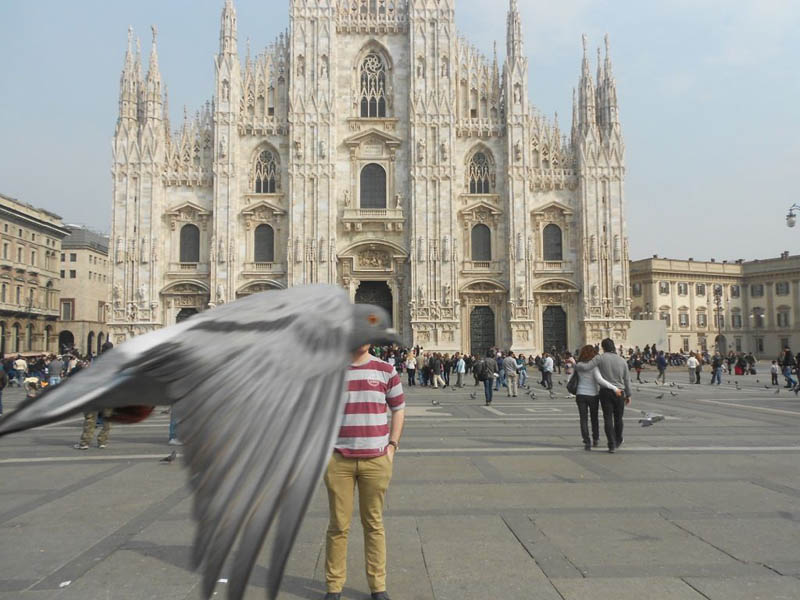 pigeon photobombing duomo milan The 15 Greatest Animal Photobombs of All Time