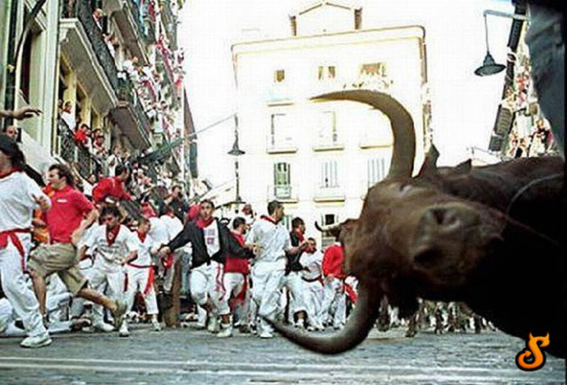 running of the bulls photobomb pamplona spain The 15 Greatest Animal Photobombs of All Time