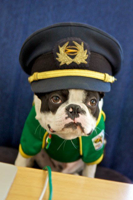 sepp blatter kulula mascot dog 2 This Airline has the Best Fleet of Planes Ever!