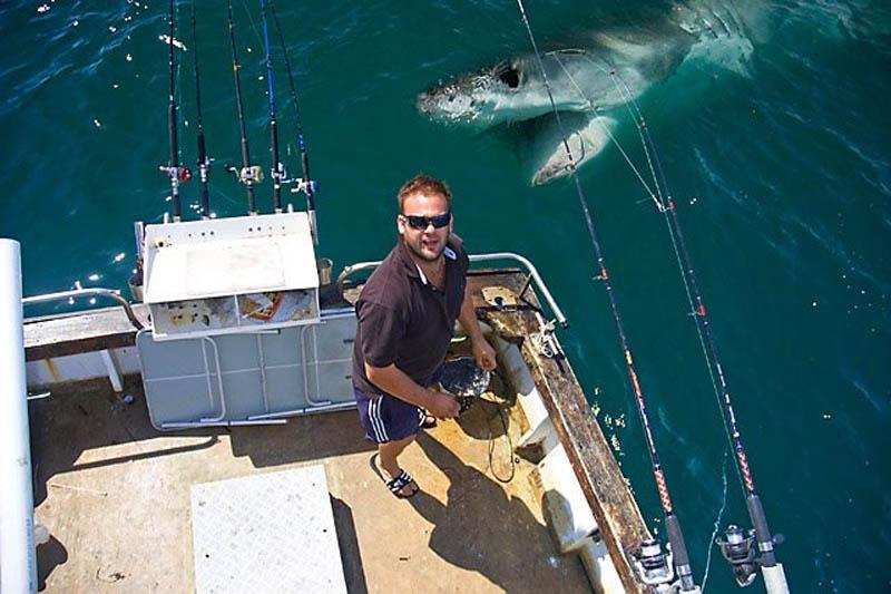 shark bomb The Shirk Report   Volume 151