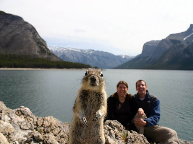 The 15 Greatest Animal Photobombs of All Time