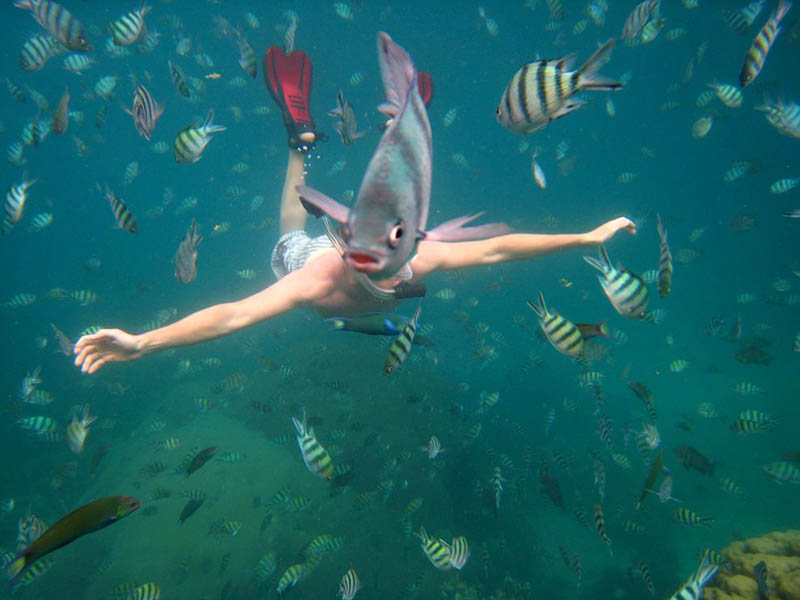 underwater fish photobomb animal photobombs The 15 Greatest Animal Photobombs of All Time