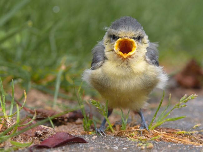 actual real life angry looking birds 4 40 Real Life Angry Birds